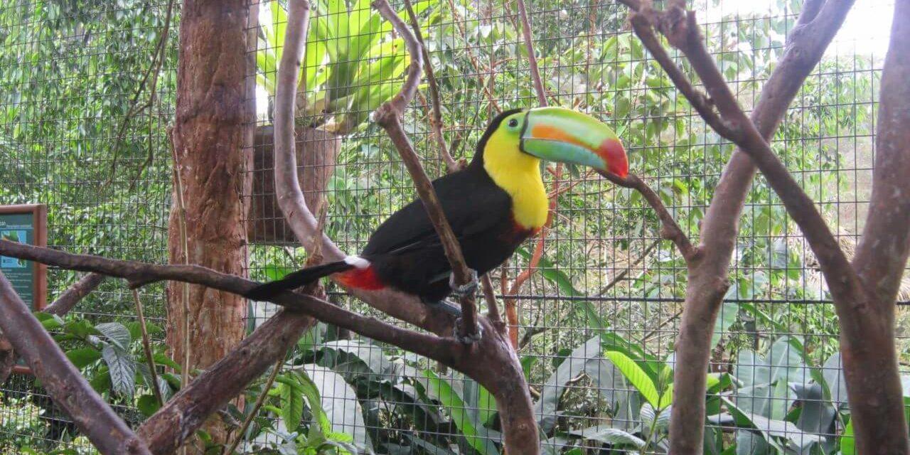 Costa Rica – Ein verlockendes und fantastisches Land