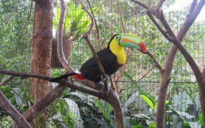 Costa Rica - Ein verlockendes und fantastisches Land
