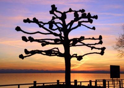 Baum vor Sonnenuntergang Friedrichshafen, Bodensee