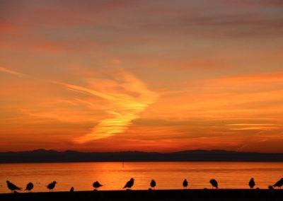 Sonnenuntergang mit Vögeln in Friedrichshafen, Bodensee