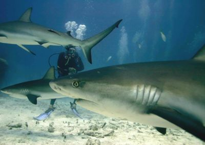 Hai Tauchen