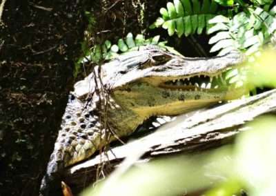 A close up of a reptile