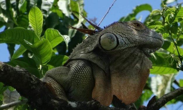 Artenvielfalt auf engstem Raum: Costa Rica (Teil 2)