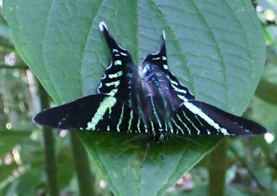 Ein Schmetterling auf einen Blatt