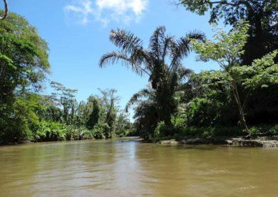 Auf dem Fluss durch den Regenwald