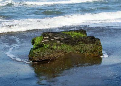 Ein Baumstumpf im Meer