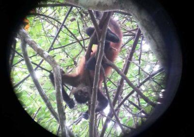 Ein Affe im Regenwald