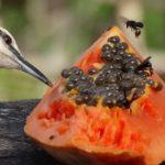 Vogel beim Mittagessen