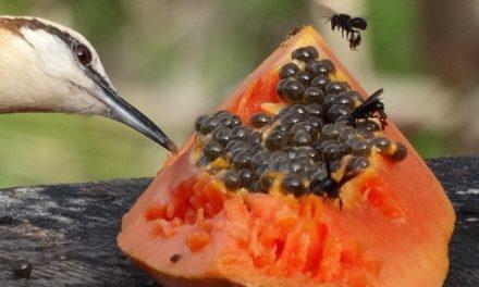 Artenvielfalt auf engstem Raum: Costa Rica (Teil 1)