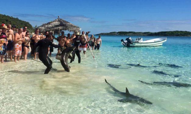 Haie und Rochen füttern auf den Exumas