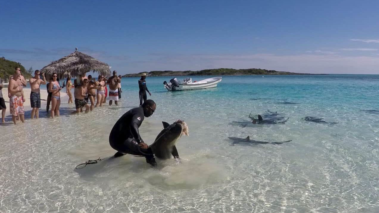 A group of people on a beach with a shark