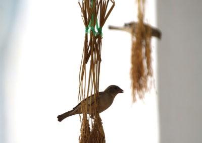 Vogel frisst Weizenkorn