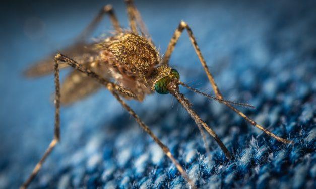 Die 10 besten Tipps gegen Insektenstiche (2019)