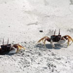 A crab sitting on top of a sandy beach
