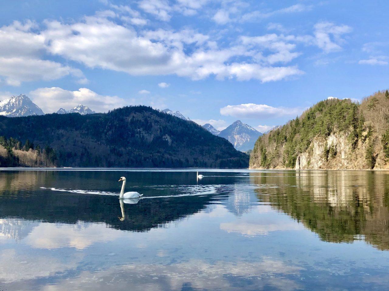 Ein Schwan in einem See vor Bergen